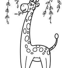 Coloriages De Girafes Coloriages Coloriage à Imprimer Gratuit