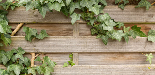 Decorative Plants and Shrubs to Beautify Your Fence | Expert Solutions for Every Type of Fences| La Habra Fence Co. Blog