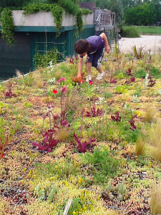 Phyto Kinetic: Green Roofs for City Buses<br />and Improved Urban Ecosystem | Urban Gardens