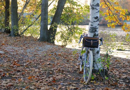 Autumn Birch, Nordavinden