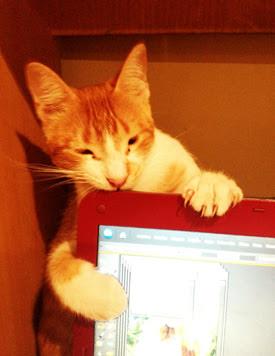 Cute Kittie!