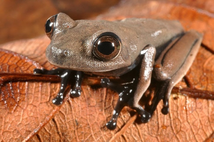 New species: this sleek chocolate-colores