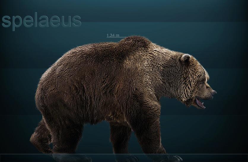 ursus spelaeus by serchio25