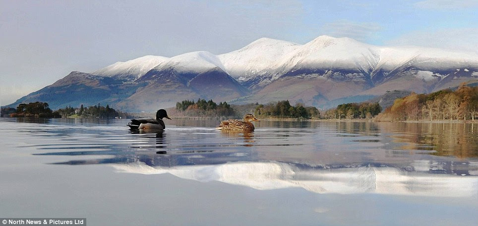 Ruffling feathers: These duck brave the icy weather to take a dip in Derwentwater, near Keswick in the Lake District in a beautiful winter scene