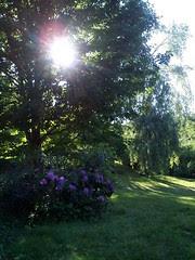 Trees60209