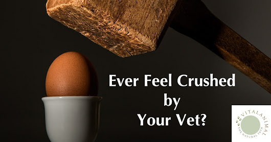 Are You a Victim of Veterinary Abuse?
