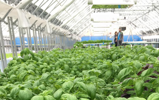 6 Facts about Aquaponics