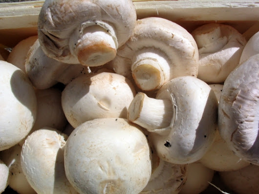 Ireland's mushroom sector takes heavy hit after Brexit Agriculture, news for Ireland, Agriculture,Ireland,