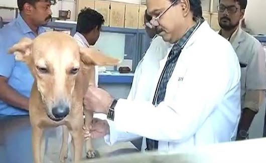 Should Chennai dog torturers be allowed to become doctors?