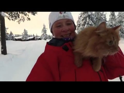 Cat Behaves Like A Dog Scientific Experiment