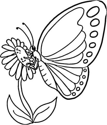 Disegno Di Farfalla Monarca Da Colorare Disegni Da Colorare E