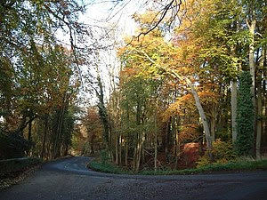 Toms Hill - geograph.org.uk - 339714