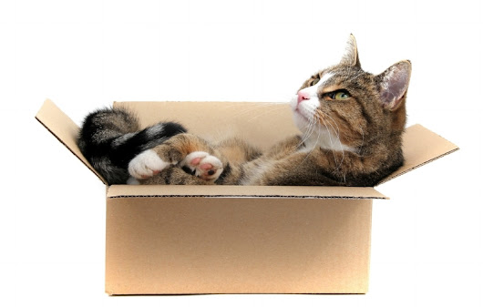 Top 7 Tips for Moving with Your Cats