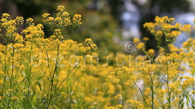 Yellow Flowers With Insects Stock Video - Video: 40590397