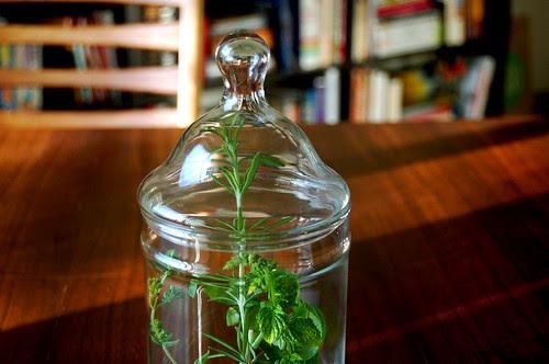 rosemary, glass