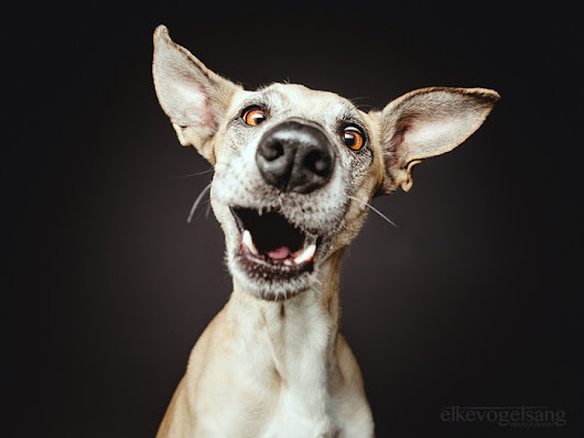 Photographer Shows Off The Joys Of Rescued Dogs