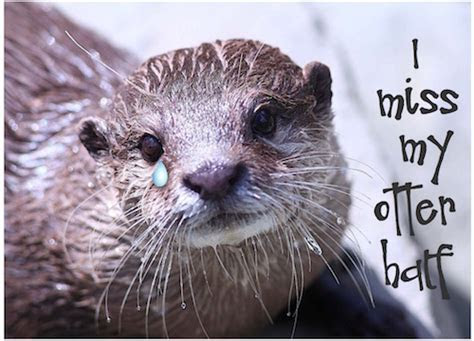 I Miss My Otter Half! Free Missing Him eCards, Greeting