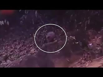 Alien Captado en el Bosque