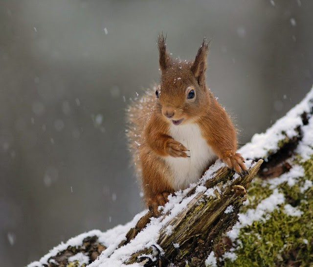Happy Red Squirrel