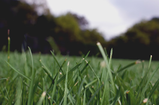The grass is always ... | farahsiddiqui