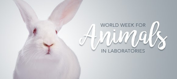 bunny_week.jpg