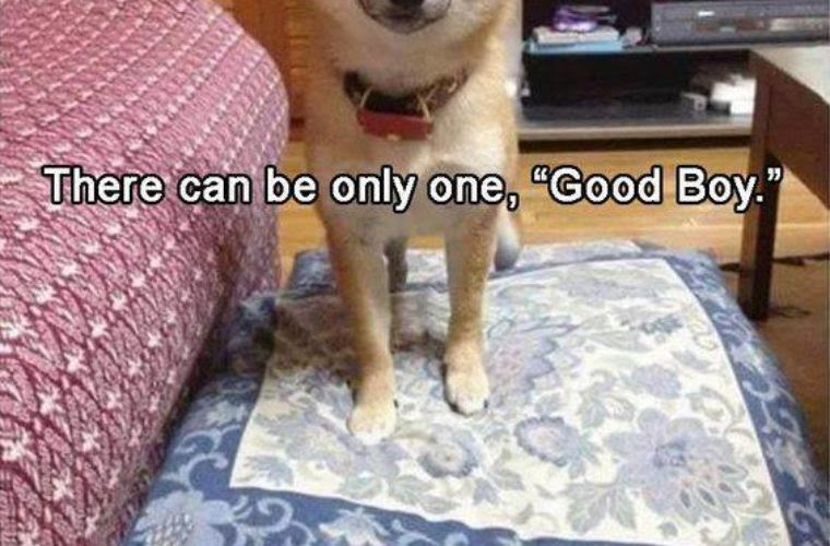 Good Boy Funny Pictures Quotes Memes Funny Images Funny Jokes