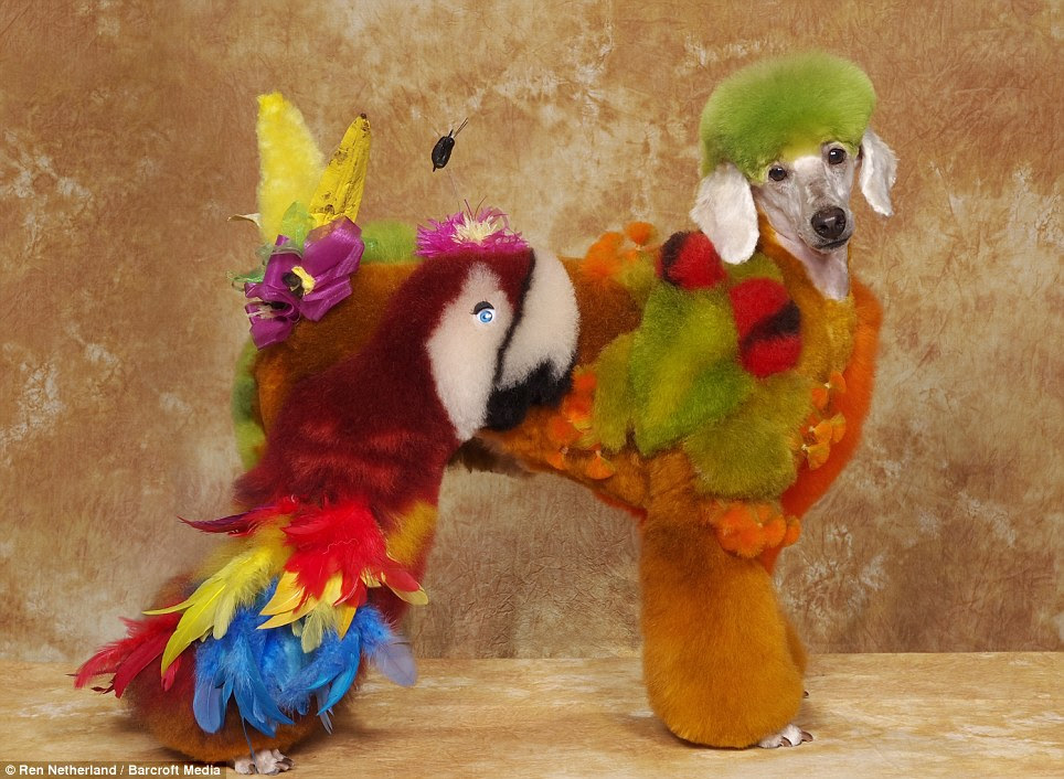 Tropical: With its bright colours and bold colours it is recognisable as a parrot