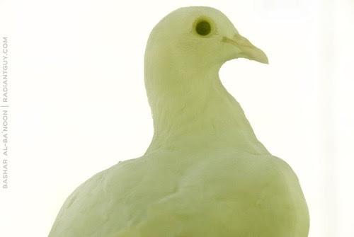 Dove's story