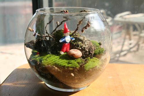 Finished Moss Terrarium