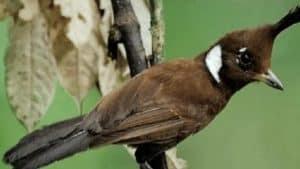 masyarakat memang banyak yang senang memelihara burung peliharaan di rumah dengan berbaga 10 Cara Ternak Burung Cililin