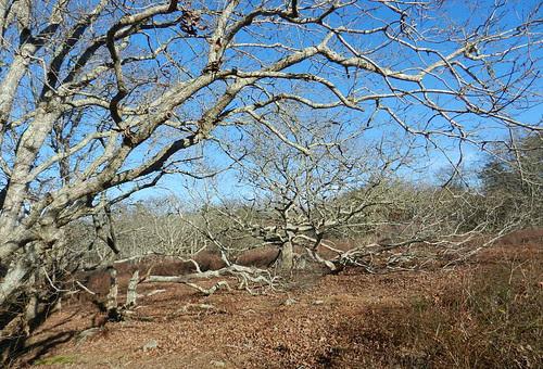 weathered trees!.jpg