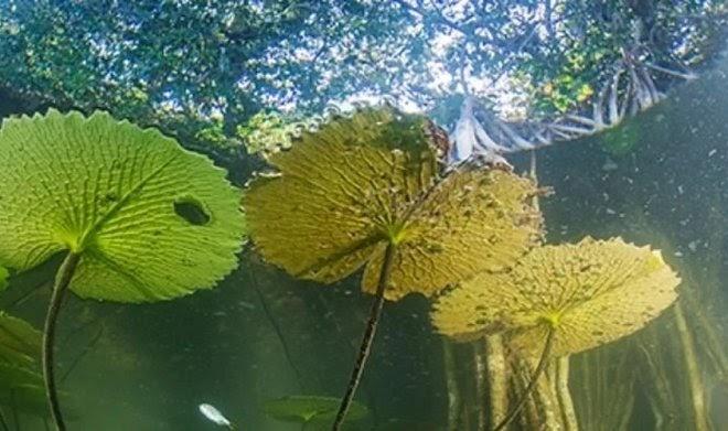 В Мексике найден реликтовый лес, сохранившийся с последнего ледникового периода