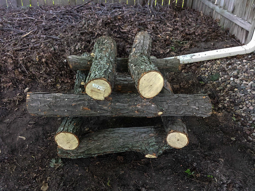 Inoculating Logs for Mushrooms
