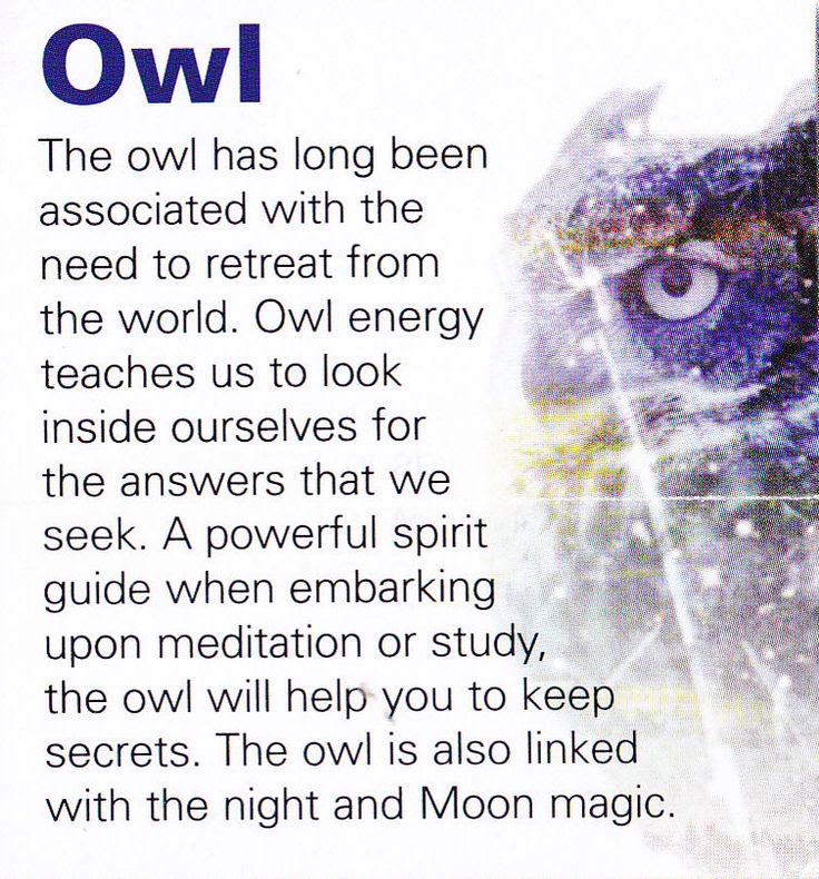 48 Meaning Of Owls In The Bible Meaning The Of Bible Owls In