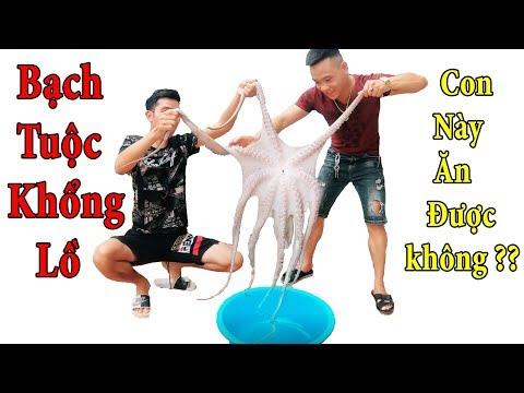 PHD | Ăn Thử Và Cảm Nhận Bạch Tuộc Khổng Lồ | Giant Octopus