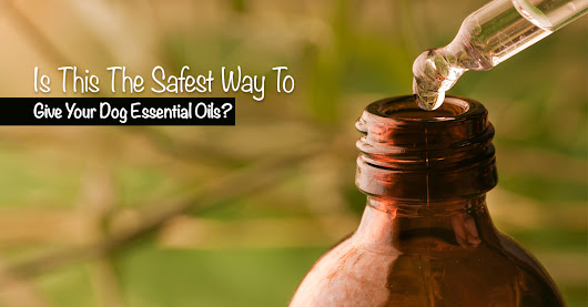 Essential Oils For Dogs: Keeping It Safe