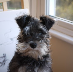 Portait of a Dog