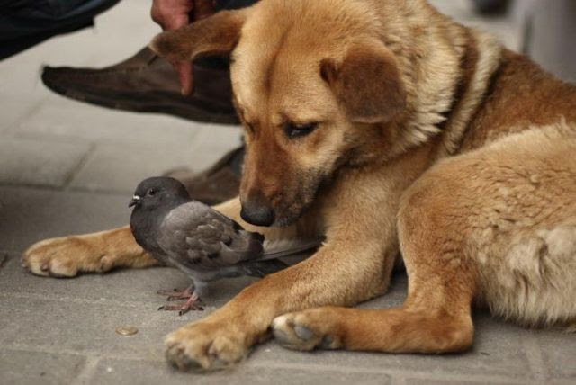 Friendship animals.  Puppy and dove