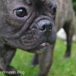 Winston - The Winston Blog