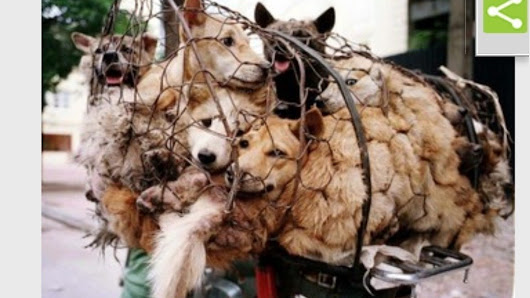 Central Government: Kerala to export strays for Yulin festival