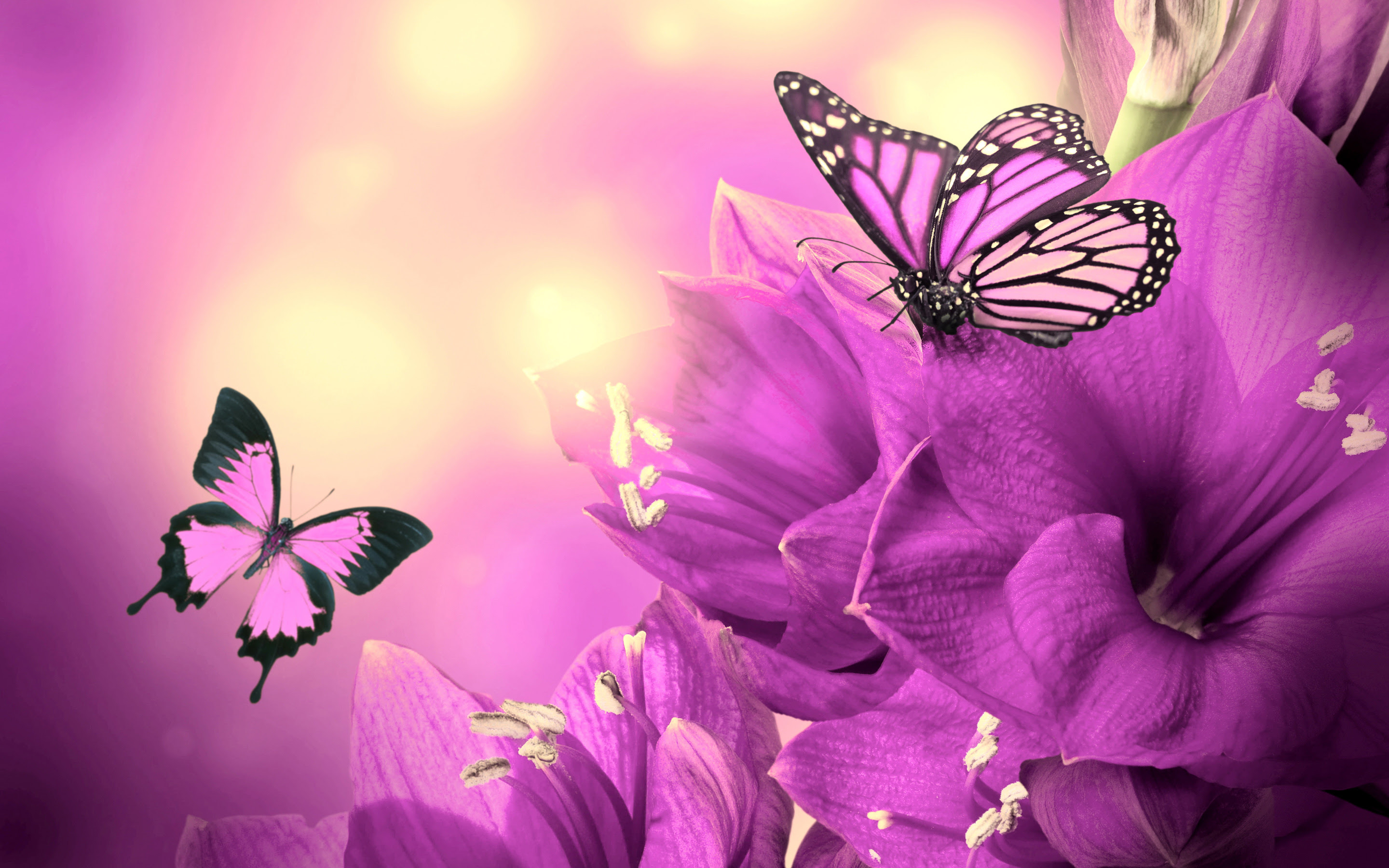 Beautiful Butterflies Wallpapers, Pictures, Images