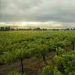 Bella Union: The Next Step in our Napa Valley Vineyard Journey - Nickel & Nickel Blog