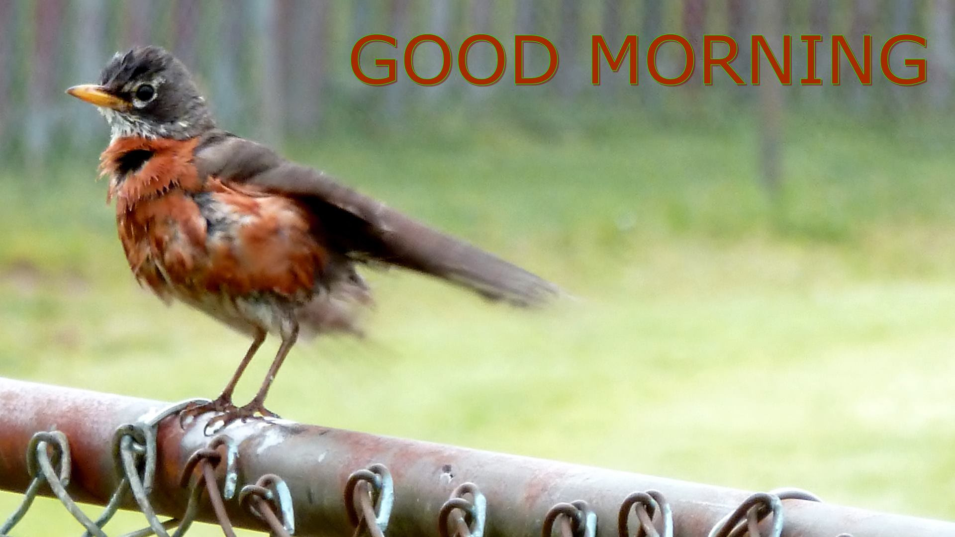 Good Morning Bird Images
