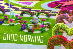 246 Good Morning Images Photo Pictures With Flowers Hd Download