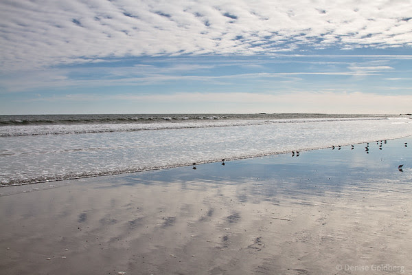 reflections and sanderlings, Jenness State Beach, Rye, NH