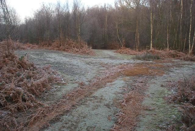 DSC_5524 frost