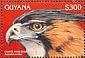 Ornate Hawk-Eagle Spizaetus ornatus