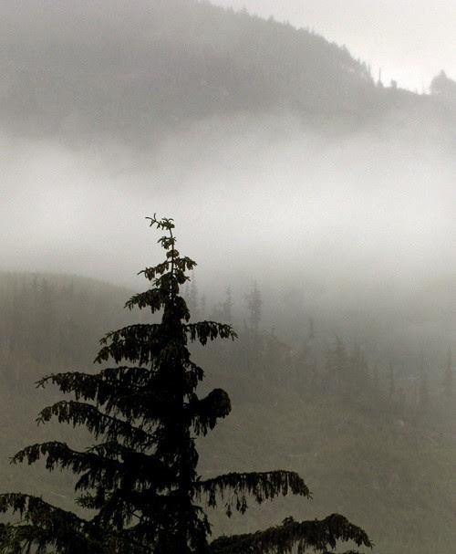 fog on Kasaan Mountain, Kasaan, Alaska
