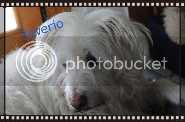 photo 54dfffac-14c3-421e-8c16-6d7d5ad0b7af_zps334e1955.jpg