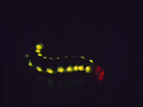 10 Awesome Land Creatures That Can Glow ? Life Science Exploration